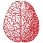 Доказаномассовое повреждение мозга у алкоголиков