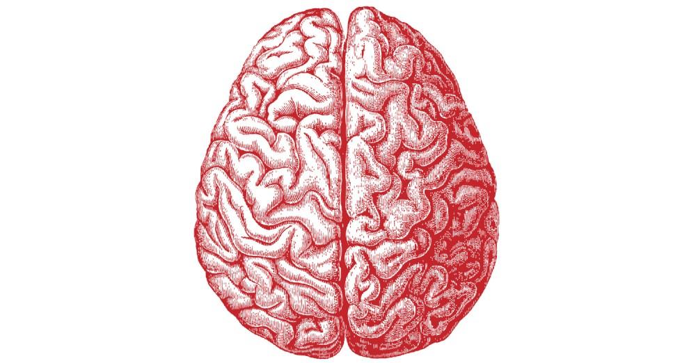 brain-webtoc