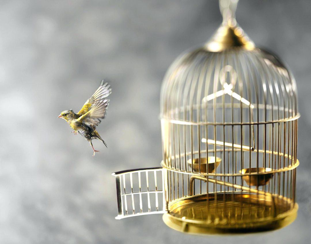 Сонник птиц в клетку сажать 91